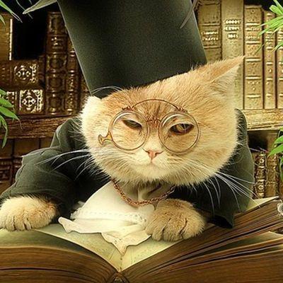 Кошки оказались способны понимать физику
