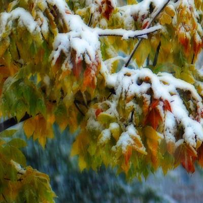 Уже сегодня мокрый снег выпадет на западной Украине