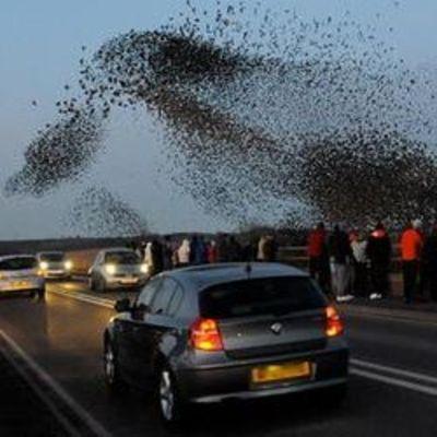 Пьяные птицы устроили пробку в Австрии