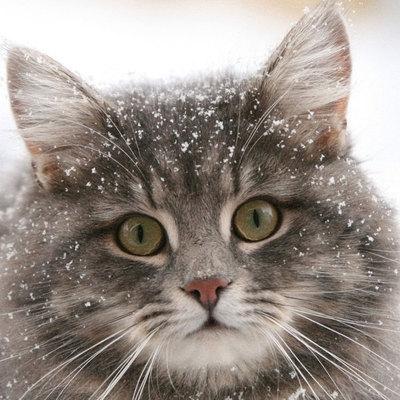 В столице выбрали самого большого кота Украины (фото)