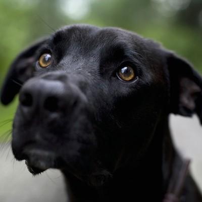 Пес, который плачет из-за поездки хозяев, взорвал Сеть (видео)