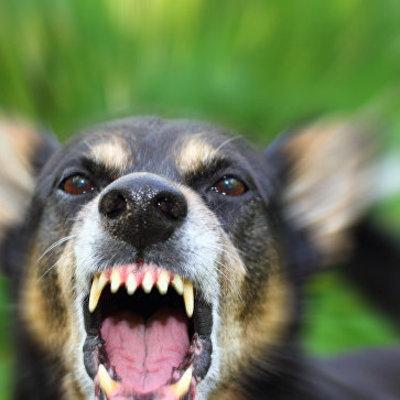 Собаки до смерти загрызли семилетнего мальчика