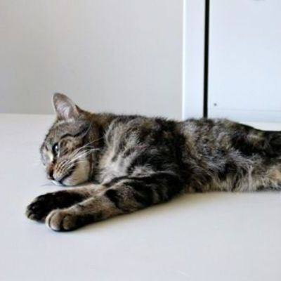 Австралийка оставила в доме без еды и воды 14 кошек, которые съели друг друга (фото, видео)