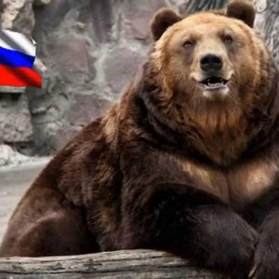 Как победить русских, если у них медведи в депутатах  (видео)
