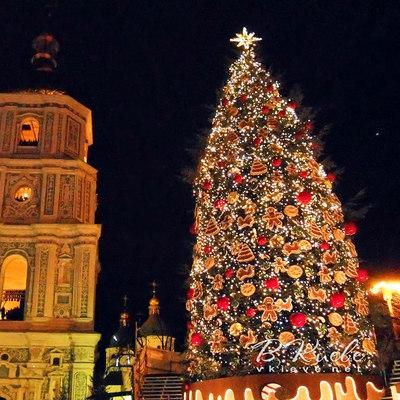 Стало известно, когда начнется установка новогодней елки в Киеве
