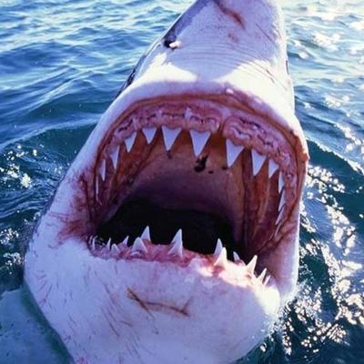 65-летний мужчина голыми руками отбился от белой акулы (видео)