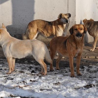 Собаки насмерть загрызли мужчину на Киевщине