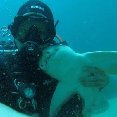 В Австралии 7-летний дайвер дружит с акулой (фото)