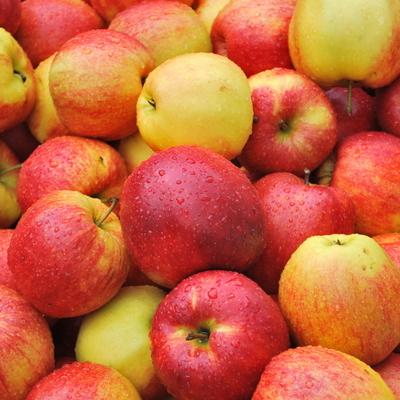 Полиция оштрафовала пенсионерку на 12 тысяч грн. за торговлю яблоками (Видео)
