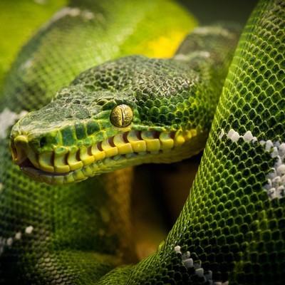 змея в попе видео