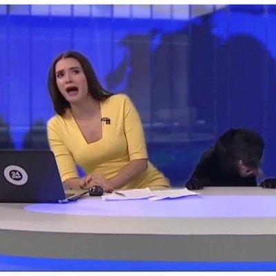 В прямом эфире телеканала МИР 24 ведущую напугала большая любопытная собака (фото, видео)