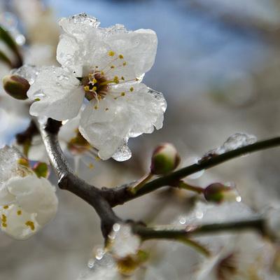 Весенние заморозки уничтожили треть урожая фруктов и ягод