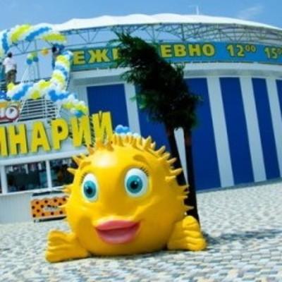 Суд арестовал киевский дельфинарий «Немо»