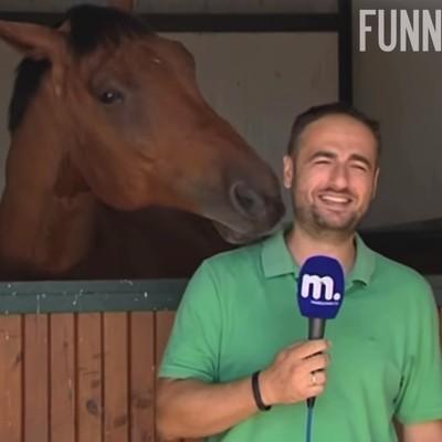 Игривый конь помешал журналисту записать репортаж - (ВИДЕО)
