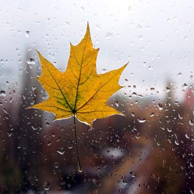 Во вторник температура пойдет на спад, на западе Украины - дождь