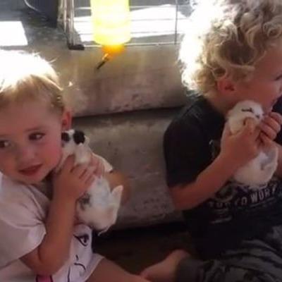 «Они могут умереть от шока»: милое видео с детьми вызвало бурю обсуждений