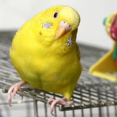 Болтливая птица: жена узнала об измене мужа от попугая