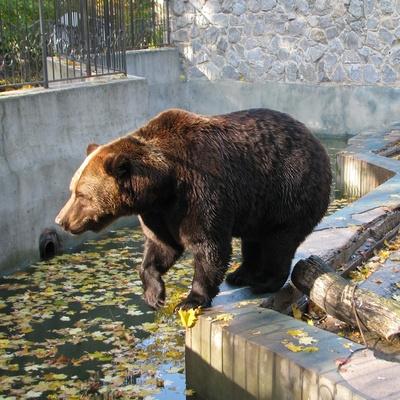 В днепровском зоопарке медведица откусила ребенку руку