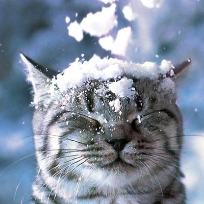 Погода ухудшится: украинцев ждет снег и морозы