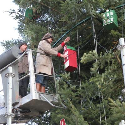 Организаторы сообщили, сколько будет стоить главная елка Украины с доставкой в Киев