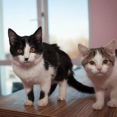В Черновцах открыли отель для котов