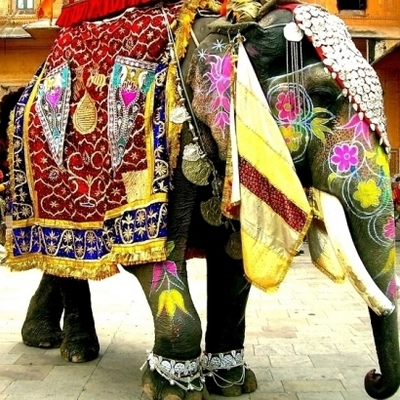 Индийский слон разобрался с автохамами (видео)