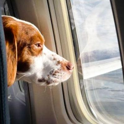 Первый в мире терминал для животных открыт в аэропорту Нью-Йорка
