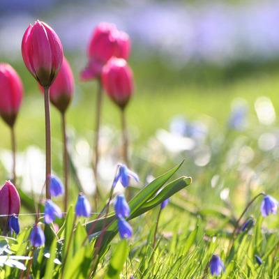 Весна пришла: В Ужгороде распустились первые весенние цветы (фото)