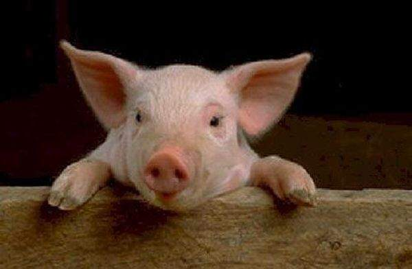 Свинка Скачать Торрент - фото 11