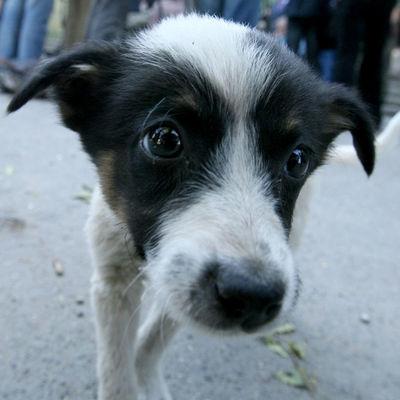 В лесу под Киевом обнаружили «братскую могилу» зверски убитых животных (Фото 18+)