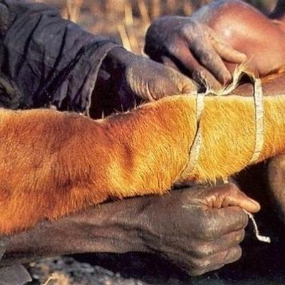 ловля питонов в африке