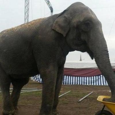 На автомойку в Черновцах «пригнали» слона (видео)