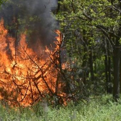 Спасатели предупреждают о чрезвычайном уровне пожароопасности в Украине 6-8 июня