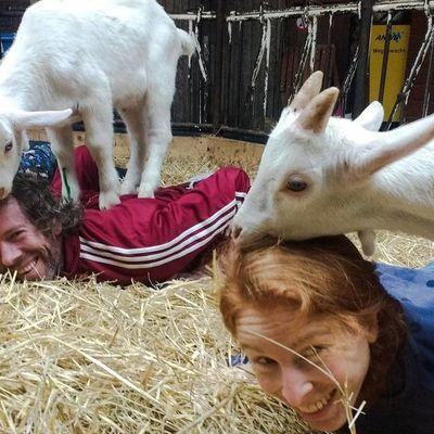 Йога с козами: в США приобретает популярность новый тренд (видео)