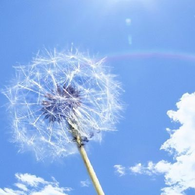 По всей территории Украины в ближайшие сутки сохранится теплая погода