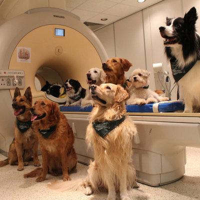 Собаки действительно понимают, что вы им говорите