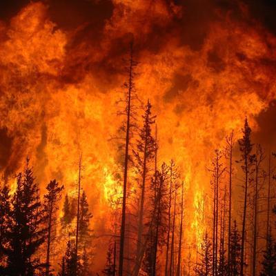 62 португальца погибли из-за лесного пожара