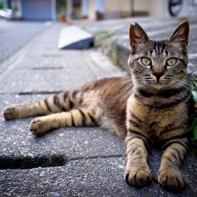 В Киеве запретили вылов бездомных котов