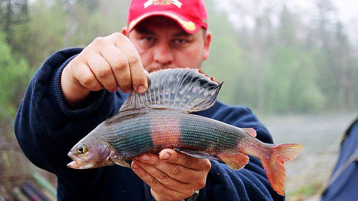 известных рыбалка приморье амурский залив лефу 2017 Зачем