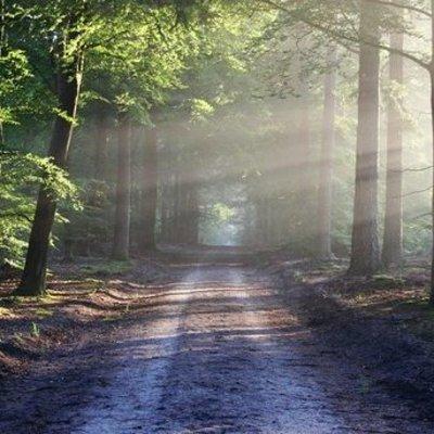 Под Харьковом в лесу нашли потерявшихся подростков
