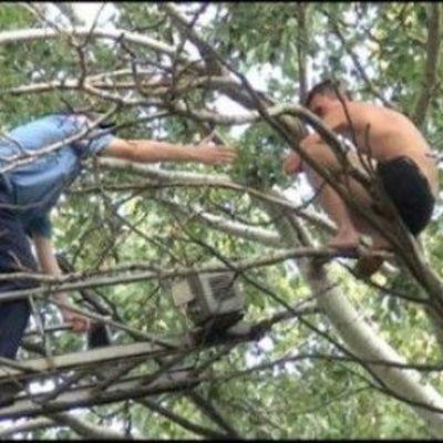 В Киеве спасатели сняли с дерева 16-летнего парня