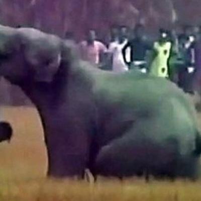 В Эфиопии слон убил туриста, проткнув его бивнем