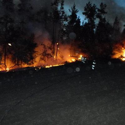 Под Киевом горит сухая трава, мусор и торф (фото)