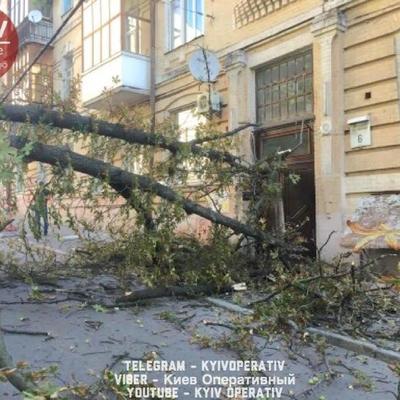 В Киеве упавшее дерево остановило движение машин (фото)
