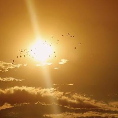 Синоптики предупреждают о сильной жаре в Украине 2-3 августа