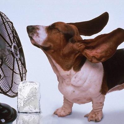 Сильная жара сегодня ожидается в 12 областях Украины