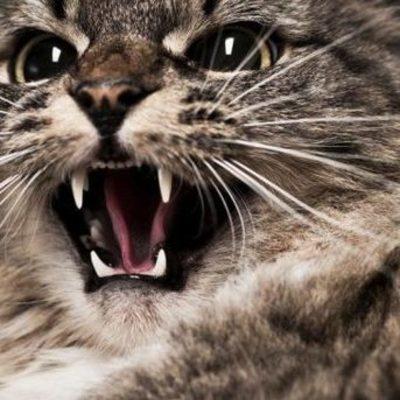В Харькове из-за бешеного кота ввели карантин