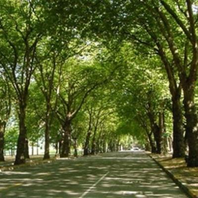 Киевляне просят расчистить город от растительности