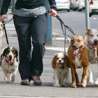 В Киеве могут территориально ограничить выгул домашних животных