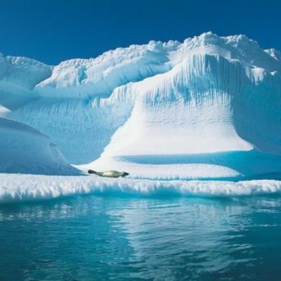 В Арктике нашли следы массового вымирания жизни на Земле